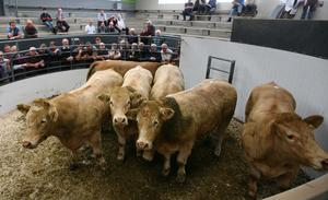 14/7/2017 Roscommon Mart  Celebrating 58 years in Business. Lot Number. 22 ( six in Lot) Weight AVG 734K DOB 17/3/15 to 26/5/15 SEX M Breed CHX LMX Price €1830 Photo Brian Farrell