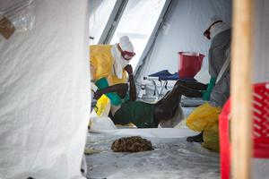Doctors remove a dead man from the new Red Cross Ebola treatment centre on the outskirts of Kenema in eastern Sierra Leone. Photo: Mark Condren