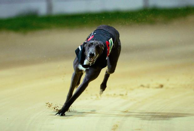 Jaytee Yankee went on to credit owner John Turner with the €20,000 prize. Photo: Stock Image