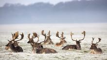 There is a proposal to introduce a pilot deer fencing project and to undertake a more comprehensive deer study in the county as a whole. Picture: Fergal Phillips.
