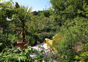 Diarmuid Gavin's garden at his home at Kilmacanogue, Co Wicklow.Picture Credit:Frank McGrath 27/5/20
