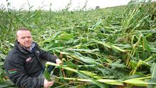 Brendan Lynch with his Maize Crop at Reaghstown Ardee. Pic Seamus Farrelly