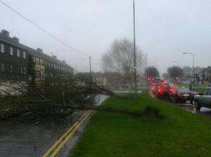 Trees fall over as storm lashes Limerick City.  (Photo: Paul Mullins)