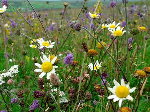 Wildflowers will arrive naturally when given the right soil conditions.