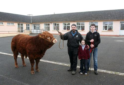 Des Joyce with his Limousin bull 'Hero', daughter Ava and son Stephen outside Glinsk National School
