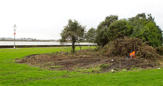 Shrubbery on the Clontarf waterfront has been cut down