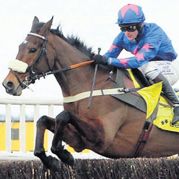 Ascot's big race yesterday was won by Cue Card after a devastating mistake by Captain Chris at the second last fence