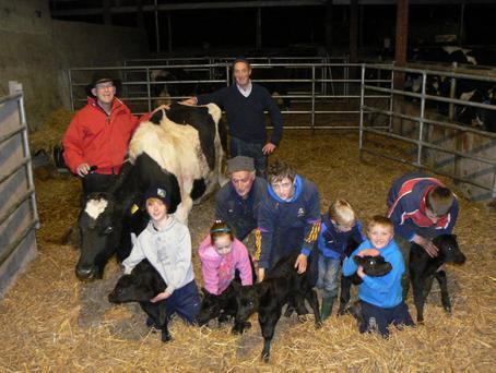 A cow in Co. Limerick, Ireland has produced 16 calves in the past 4 years. The Guinness Book of Records states that the most live births for a cow is 5 calves. However, this cow has gone and done it twice! The photo shows the happy cow with farmer Ger Kirby and his extended family. Also pictured is Dr. Dan Ryan in red jacket from CowsDNA.com. Dr. Dan Ryan scanned this cow with a multiple pregnancy and in fact diagnosed that this cow had released 6 eggs shortly after being bred. She carried 5 of them resulting in 5 live births and one mummified foetus.