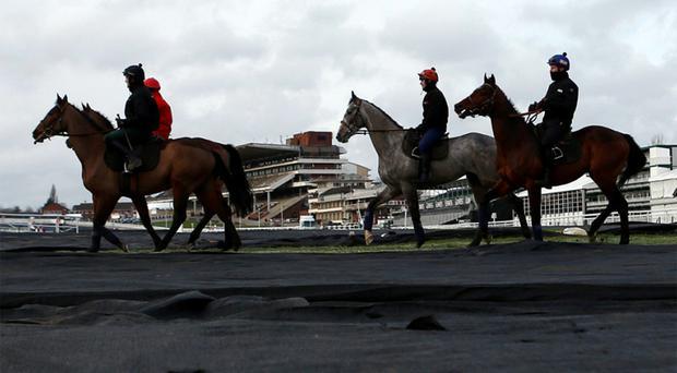 Horses pass over ground sheeting to protect against frost as they head out for an early morning gallop at Cheltenham racecourse