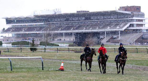 12 March: Horses from Henry de Bromhead's stable exercise on the gallops during Champion Day of the 2013 Cheltenham Festival at Cheltenham Racecourse