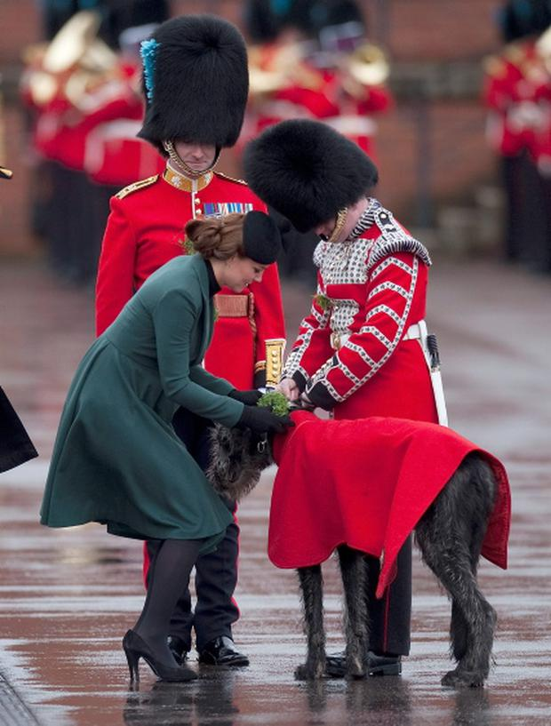 Britain's Catherine, Duchess of Cambridge presents shamrock to the mascot of the 1st Battalion Irish Guards, an Irish wolfhound called Domnhall, as she attends a St Patrick's Day Parade at Mons Barracks in Aldershot, southern England.