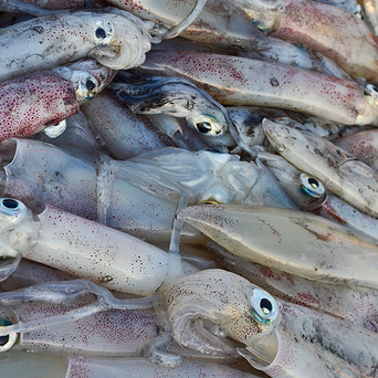 The squid was caught in the shallow waters off Guangdong province, China