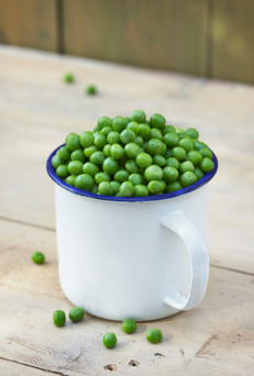 Sampling the first peas of the season is one of the great delights of any growing year