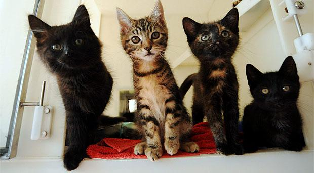 Abandoned kittens, left-right, Nymph, Fairy, Pixie and Elf