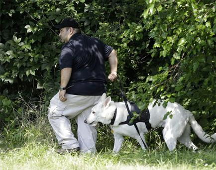 An investigator and his dog search a wooded area Sunday