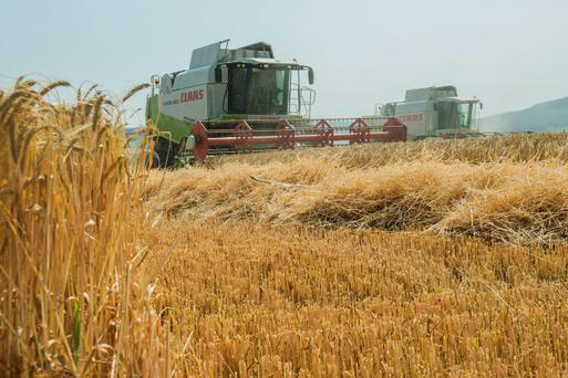 Testing Times: Redmond Lane, Ballygriffin and Ger Relihan, Castletownroche, Co Cork are pictured harvesting 'Cassia' winter barley for Denis Howard, Kilcanway, Mallow. The crop yielded 4t/ac at 19pc moisture with a bushel of 70