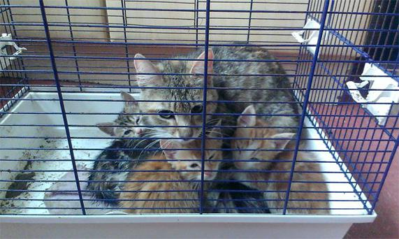 The cat and kittens which were dumped in bird cage on Meath Street