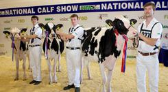 IHFA YMA National Calf Show Champions, 2013, (l-r) Honourable Mention winner Paul Flanagan's 'Tubbertoby Chip Anna', with handler Paul Daly; Reserve Champion Pat Gaynor's 'Swiftsheath Windbrook MIA', with handler Edwin Gaynor; and Show Champion M. & P. Jones's 'Hallow Boss Twain', with handler Gary Jones, at the finals in Cillin Hill, Kilkenny, Wednesday, July 31.