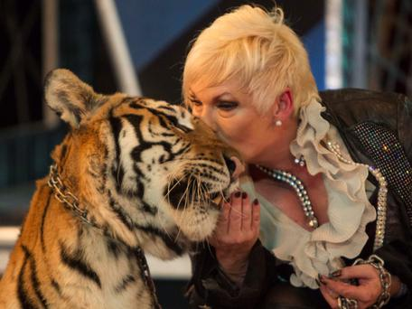 A tiger and its trainer perform during