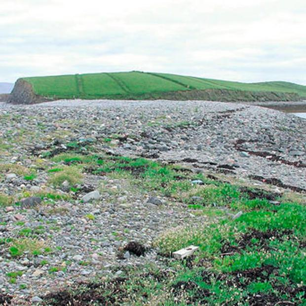 Shingle banks in Clew Bay, Co Mayo, host rare flowers, but are under increasing pressure through the removal of gravel, the building of sea defences, recreational pursuits and rising sea levels. NEIL LOCKHART