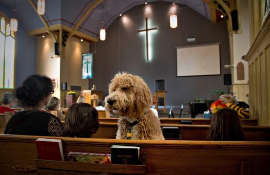 A dog named Luke sits in a pew at St. Andrew's United Church in North Vancouver, British Columbia