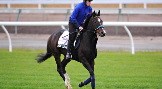 Simenon gallops on the course proper during trackwork at Flemington Racecourse ahead of the Melbourne Cup last year