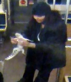 This image provided by the Chicago Transit Authority shows a woman with a two-foot-long alligator aboard a CTA Blue Line train early in the morning of November 1