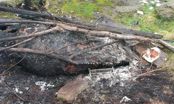 An image of the horse burned in Dublin