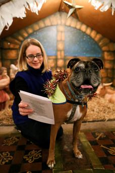 'Bruce', a Boxer, aged 8 with owner, Charlotte Walker from Tullamore, at a Christmas Choral Service at Christchurch Cathedral