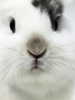 Angora fur is thought to be harvested from over 50 million rabbits on farms in China