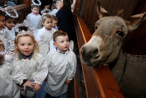 Little angels: Children from St Joseph's School, Dublin 8, meet live animals at the IFA crib in the Mansion House. Pic: Finbarr O'Rourke