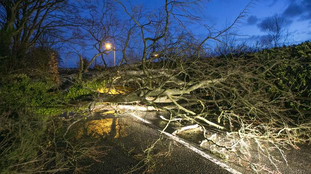 A large Tree blocks the Ballyboughal Naul Rd near Roganstown Golf Club in North County Dublin this morning