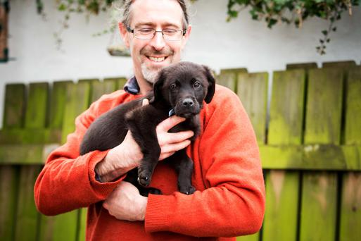 A 10 week old puppy (Indie) which was found abandoned and tied to a tree in Sligo, on Christmas Day, now in temporary foster care of B Davies, while a home is found for him. Photo: James Connolly / PicSell8 29DEC13