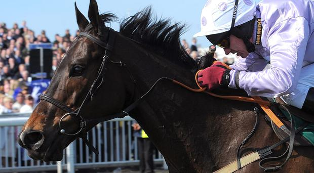 Charles Byrnes has been forced to accept that Solwhit has been ruled out of Cheltenham