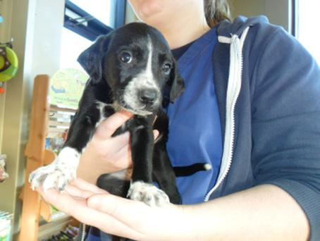 Puppies dumped in bag - DSPCA story