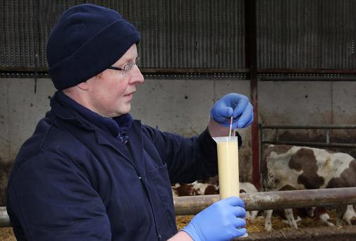 It is vital that newborn calves receive three litres of colostrum within two hours of their birth to help them thrive
