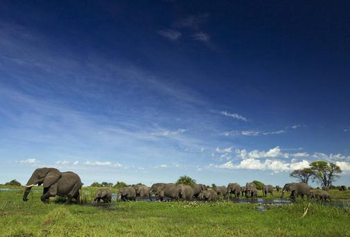 A herd of elephants is shown near the Duba Plains camp in Botswana.