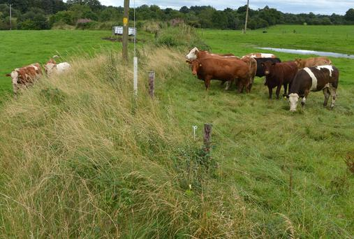 PROTECTION: Keeping your herd in isolation can help to avoid the spread of infection of Johnes Disease