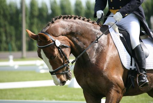 Foot woes will cause serious equine problems