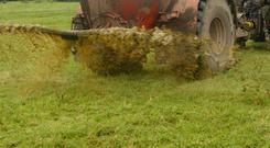 The silage ground that got slurry is also doing well.