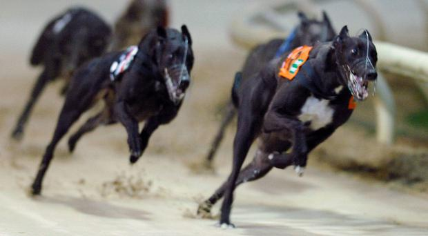 The ECC Timber Champion Puppy 525 at Shelbourne park will carry a winner's prize of €6,000