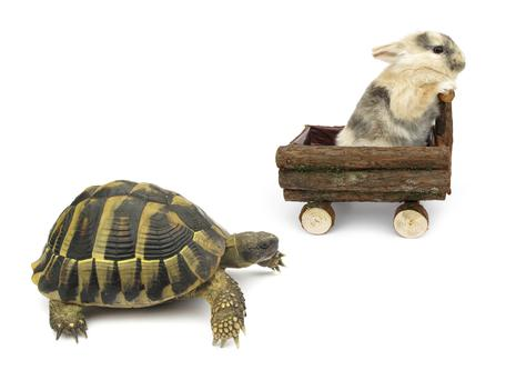 Tortoise and Hare Story Alternative Version