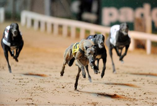 Greyhounds, Picture credit: Stephen McCarthy / SPORTSFILE