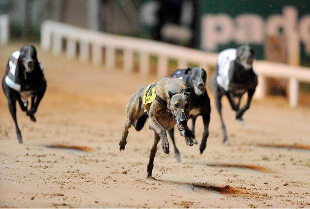 Silva was strongly supported into 6/4 favourite and the Pat Buckley-trained speedster never put a foot wrong as he proved too strong for his rivals on the night