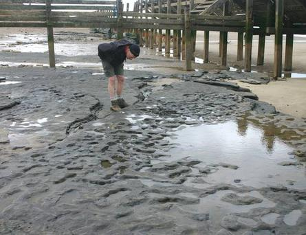 Photograph of the footprint hollows in situ on the beach as Happisburgh, Norfolk