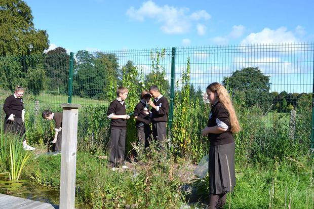 Sowing the seeds of education: children hard at work in the garden at Scoil Ide