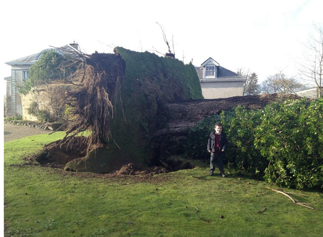 A large tree is blown down by the severe conditions in Wexford. Twitter credit: @DunbrodyHouse