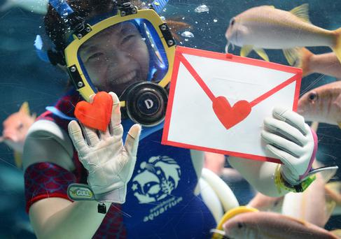 A diver holds heart-shaped squid meat dyed red to feed a ray with at the Sunshrine Aquarium in Tokyo as a feature for Valentine's Day on February 10, 2014. The aquarium is holding the event four times a day until February 14. PHOTO: TORU YAMANAKA/AFP/Getty Images)