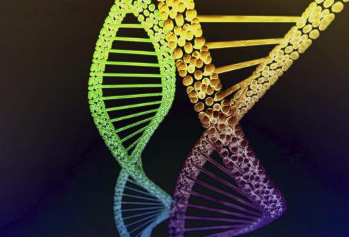 Law experts say it is imperative a DNA database is introduced