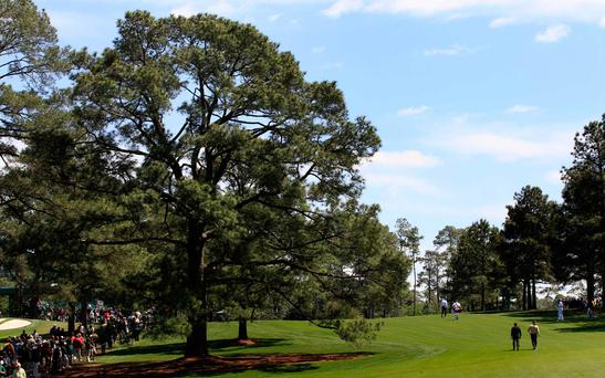 The Eisenhower tree at Augusta National